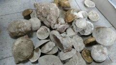 台湾屏东豪雨冲垮路坡 上万年贝类化石重见天日